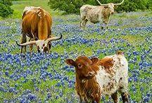 Texas / by Ashley 'Sheridan' Clampitt