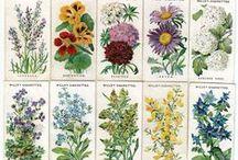 Household-Garden-Plants-Cottage Garden