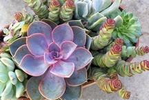 Cacti and Succulent / by Betty  Burton Harrison