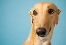 Dog Breeds / Raças de cães