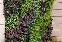Garden / Vertical