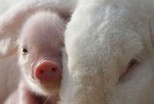 Animals :-*