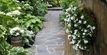 Garden / Paths