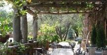 Garden / Pergolas