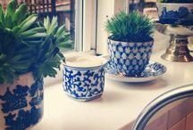 House Plants / House plants