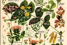 Botánica / by Mundo Bu