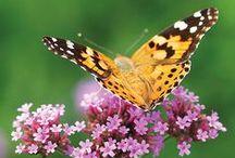 Butterfly, Hummingbird & Wild Bird Garden Plants & Ideas / by Deborah Harvey