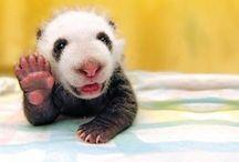 Too darn cute <3 / by Shanon Barden