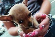 Cute Dogs / by Xueling Zou