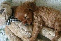 Amabili animali / Ogni volta che un cuccioletto peloso di qualsiasi razza sia mi colpisce al cuore finisce dritto in questo posto! Quando volgio risollevare il morale è qui che vengo ;)