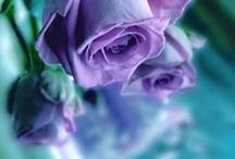 Purple/Teal / by Susan Johnson