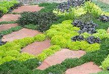 Dream Garden / by Lisa Dearen | Whisk & Cleaver