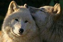 Волки\ Wolves