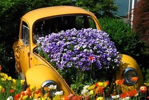Punch-Buggy (VW) / Beginning of the fun days to enjoy the world we have now. / by Clifford Lovett