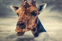 Giraffe Love!!! / by Brian Jill Schultz