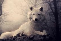 Hungry like the wolf... / by Elisavet Kondou