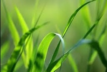Pure Grass® / The delights of a summer day and the scent of freshly cut grass are captured in our Pure Grass® fragrance.  It is the scent of a weekend drive in the countryside, with the windows rolled down and the sweet breeze of summer coming through.