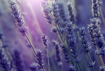 Lavender / Calming and relaxing, our Lavender scent is a true rendition of the scent of Lavender fields found in Provence.  It will bring the French countryside right into your own home!  All Good Home Company fragrances are 100% phthalate-free.