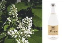 Bring On The Spring / Get an early start on Spring and surround yourself in the signature scents of the season with The Good Home Company.