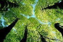 Healthy Environment / Visualizing a healthy environment, worldwide. Pins by architect Maia Gilman. www.maiakumarigilman.com / by Maia Gilman