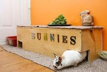 Rabbit Care / Hutch Ideas