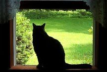 Cats large and small / by Liz Burnside