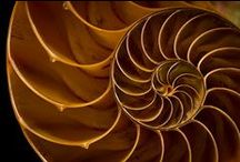 Golden Ratio in Nature / The Golden Ratio found in Nature / by Jay Alders
