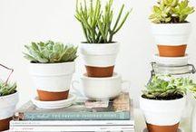 Macetas decoradas / Ideas de macetas DIY para decorar con plantas tu hogar.