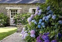 House / Garden
