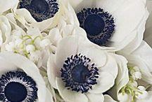 | Wedding: Black&White Themed |