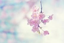 Printemps ♥ Spring / Inspirations printanières