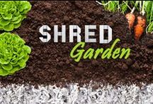 Shred Gardening / Some of the many uses of shredded paper in the garden.
