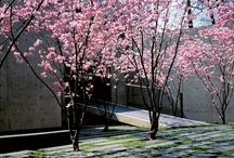 el patio / by Laura vdlt