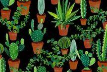 fotosíntesis / by Laura vdlt