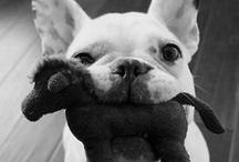 lovable animals / cuteness! / by Robyn Konicek