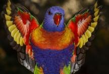 Feather Fancy / by Rosie Merrill