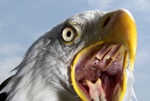 Birds of Prey / by Rosie Merrill