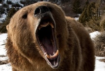 Bear All!! / by Rosie Merrill