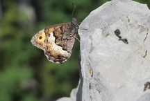 """Fauna / """"Cuando los bichos se cruzan en tu camino""""Algunas imagenes de los animales con los que compartimos estas montañas Pirenaicas."""
