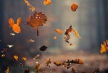 Autumn / by Stephanie Vanderham