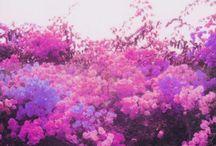 Colour // Purples