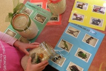 Class Work Ideas - General / General ideas for tray work or self study in the Montessori Classroom.  / by Clair Battle