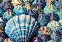 Seashells ~ Beaches
