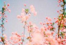 Flores y plantas / by Fructibus