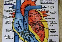 Nursing / by Mariah Ergang