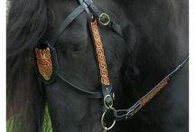 Equus / by Em Sullivan