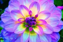 Flowers & Gardens / by Rita