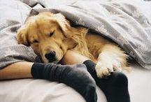 Pupppy love / by Sierra Aguiar