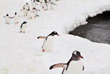 Winter / by Weldon Owen