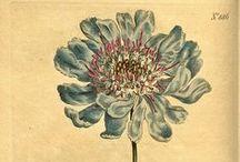 Botanical Prints / by Danelle Knapp
